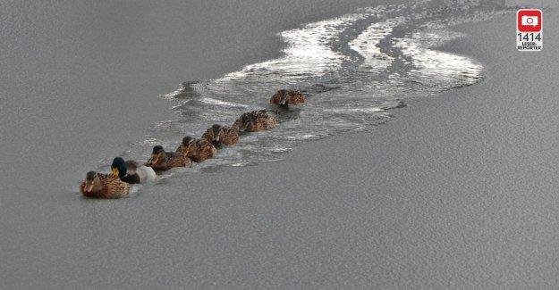 Le Canard Chipeau Fortement!: Brise-glace de Canard dans l'Utilisation