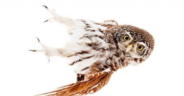 Nouveau Livre sur les Oiseaux: De coquette Auerhähnen et charmant Käuzen