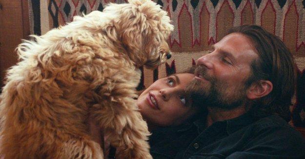 Bradley Cooper: le Chien de Charlie volez Oscar-Star Show