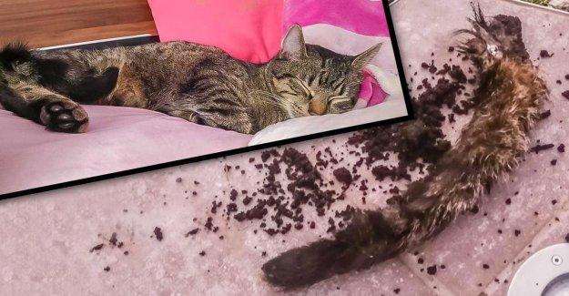 Chat enlevé: Maintenant, la Bite dans Blumenkübel