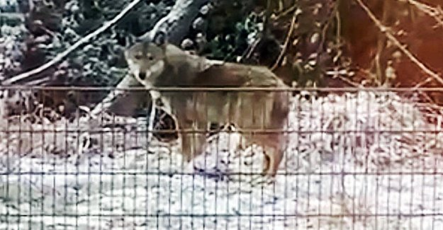Commentaire pour le Loup de Tir de l'Interdiction: Il faut sans doute qu'un Enfant de mourir