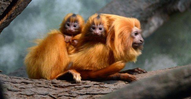 De Francfort, dans le Monde entier : Notre Zoo est un Export-Schlager