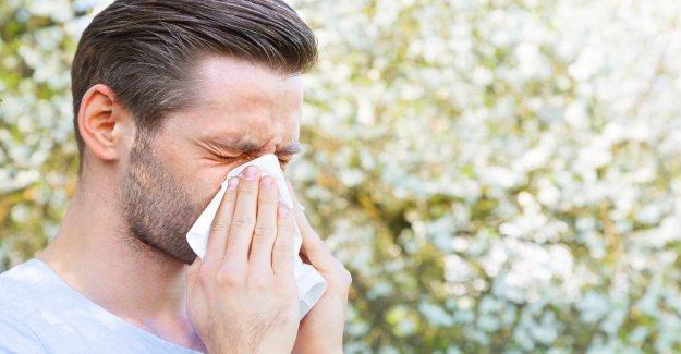 Le Pollen de voler, de rhume des foins, l'Alarme de! Comment les personnes Allergiques protéger maintenant