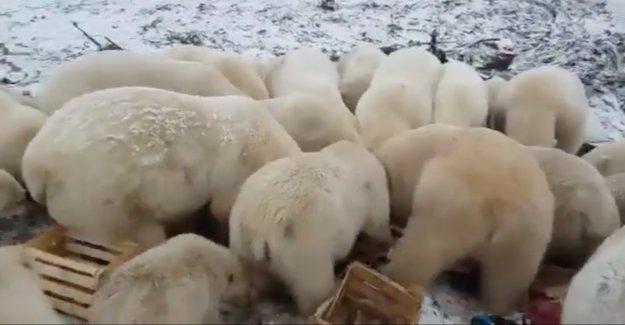 Les ours polaires de la Terreur russe, Îles – de- catastrophe - Vue