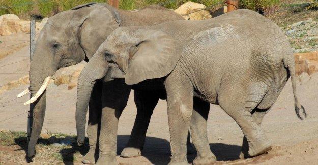 Mulhouse: des Éléphants de la Relève dans le Zoo