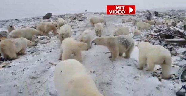 Raubtierinvasion en Russie: Le secret du Destin de la Eisbäreninsel