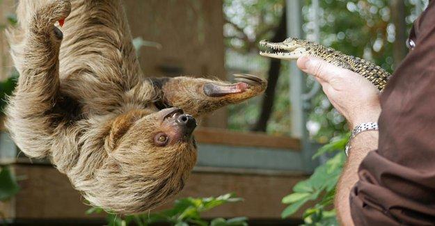 Bye, Bye!: Lausitz-Crocodiles tirer sur l'Île