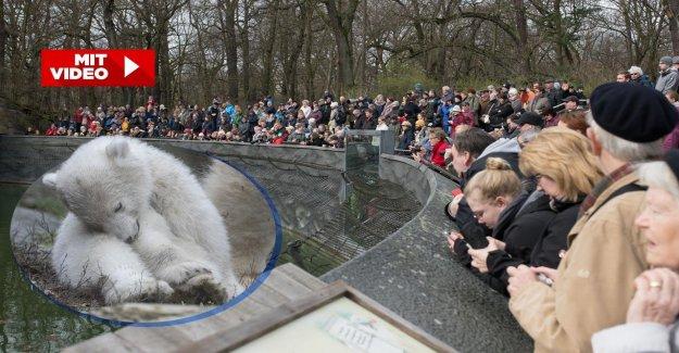 Dans le parc Animalier: Berlin, Ours polaire, les Filles attire TOUS les Regards