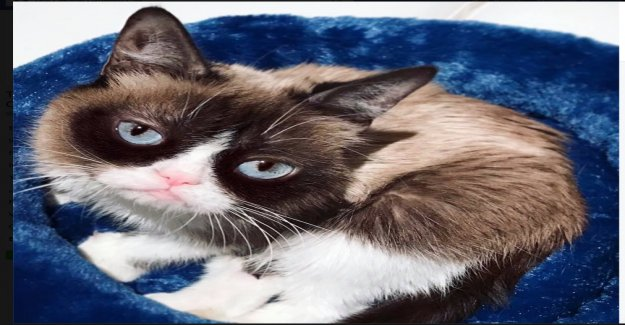 A seulement sept Ans: «Grincheux Cat» est mort - Vue