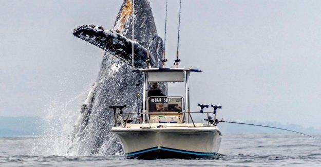 Baleine à bosse et le bateau de Pêche: Scène Impressionnante de la Californie
