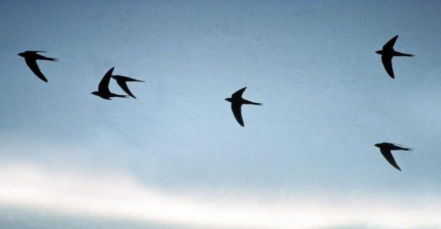 De nombreux Oiseaux meurent à cause de Verre - Regard