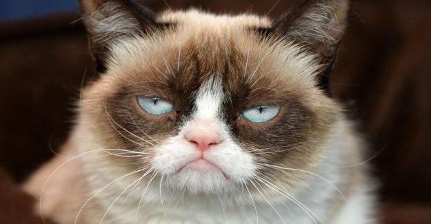 Grumyp Cat est mort: Culte Chat meurt, après les infections urinaires Infection