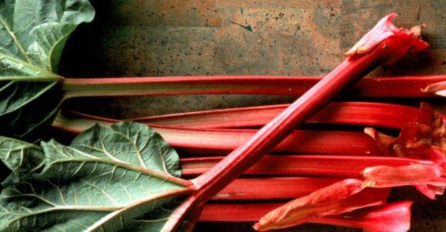 La rhubarbe: Pourquoi les Dents ternes?