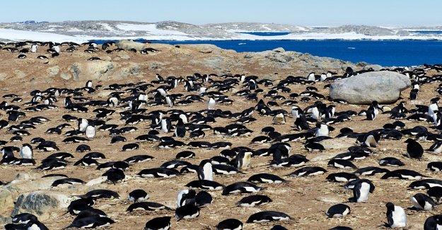 Pingouins et des Phoques, des engrais et de l'Antarctique - Vue