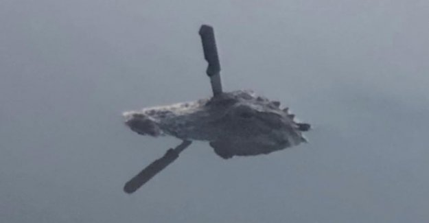 C'est le plus dur Alligator de Floride? - Vue
