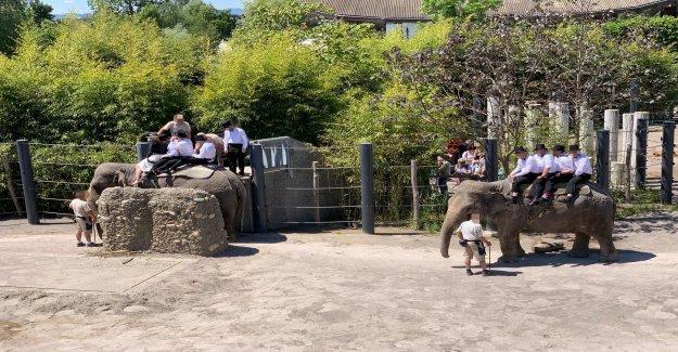 Cinq Étudiants de l'équitation à Rapperswil (SG) sur le dos d'un Éléphant - Vue