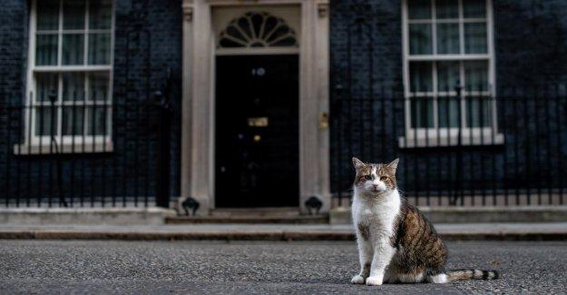 Downing Street: Boris Johnson Gueule de bois de Larry nouveau Colocataire?