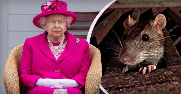 La reine Elizabeth II: Infestation de Buckingham Palace