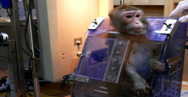 Le conseil fédéral rejette l'Initiative pour l'Interdiction de l'Expérimentation animale à partir de