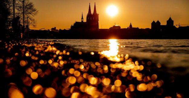 En tant que première Ville allemande de Cologne appelle Klimanotstand de