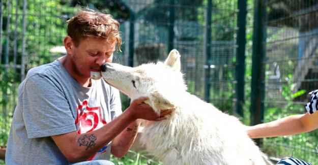 Le Hurlement beau!!!!: Le cancer du Patient (42) blottir avec les Loups