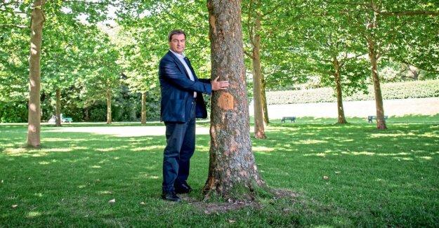 Pour le Climat : Markus Söder veut Millions de planter des Arbres