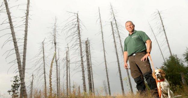 Résine: La Forêt meurt, mais les Touristes continuent à venir