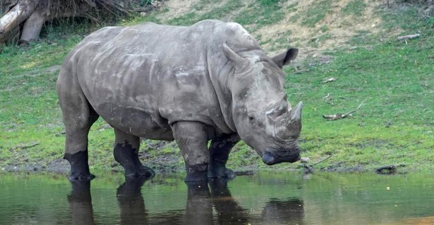 Serengeti-Park: rhinocéros blancs à l'Âge de 50 Ans est mort