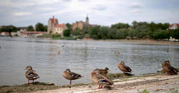 En raison de Entenkot - Baignade au Lac Sucré