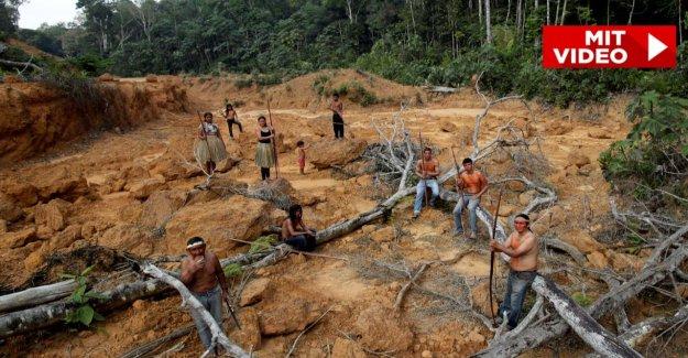 Le feu de l'Enfer dans la Forêt: Ainsi, la souffrance, les Indigènes du Brésil