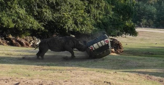 Le rhinocéros tourne: le Choc des Scènes dans le Parc du Serengeti Hodenhagen