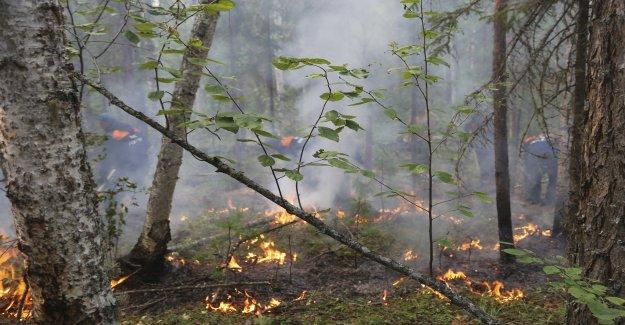 Les incendies de forêt en Sibérie de rage à la suite: Incendie hors de Contrôle - Vue