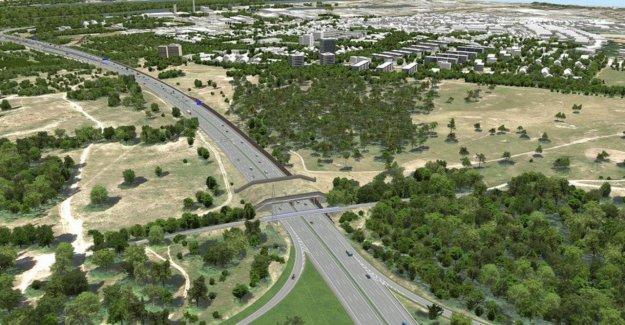 Mayence: Cela Zoff dans RLP: Autobahnausbau dans la Réserve naturelle de