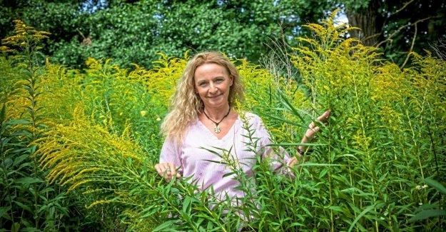 Sarrebruck: des Conseils d'Expert Lilian Franz: Pour Pflück les Herbes