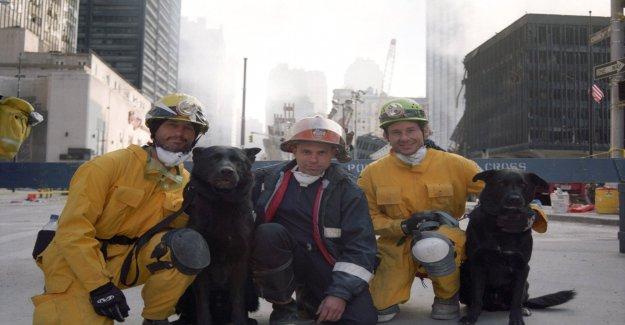 18 Ans après l'Attentat de New York: les Nouvelles Images de 9/11 - Vue