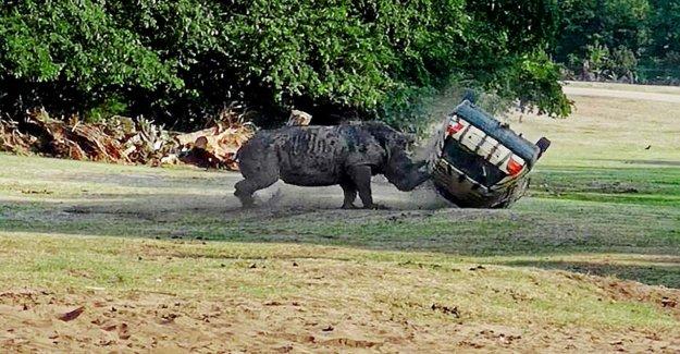 Après l'Horreur d'Attaque dans le Parc du Serengeti Rhinocéros Victimes fonctionne de nouveau!