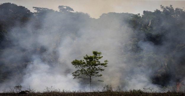 Des Incendies dévastateurs: Comme nous la Forêt tropicale de sauver Vue