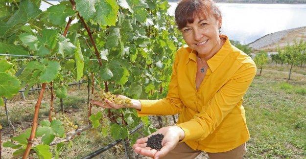 Lausitz: Le Dopage dans le Vignoble