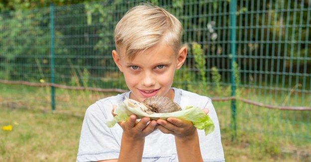 Odenthal: Comme les Escargots les Éducateurs prennent en charge