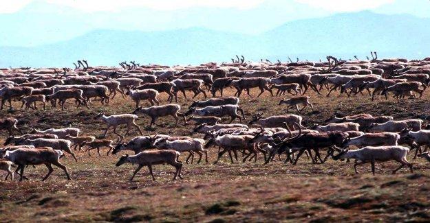 Trump y a une Réserve naturelle en Alaska pour des Trous de libre - Vue