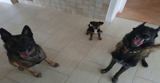 Hundedrama dans Rohrbach – Propriétaire d'Animaux ont empoisonné