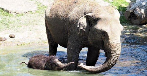 Leipzig: Ben Long de mort qu'en est-il des Éléphants d'Élevage continue