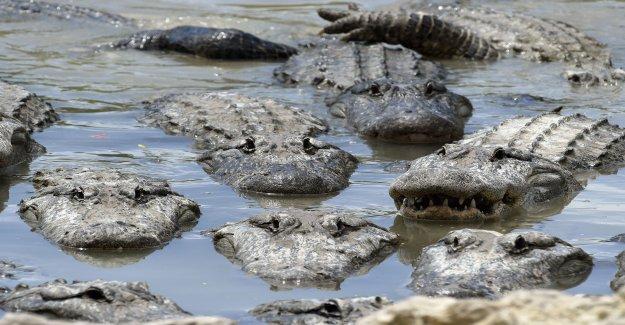 Mexique: Trump voulait à la Frontière Alligators Fossés de construire - Vue