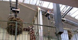 La réhabilitation du Zoo de Francfort: la Surface n'est pas tout