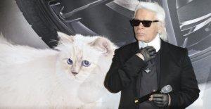 Karl Lagerfeld mort: Ce qui est un Chat Choupette?