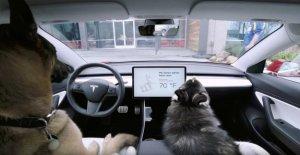 Tesla Dog Mode : Climat Fonction de son compagnon à quatre Pattes