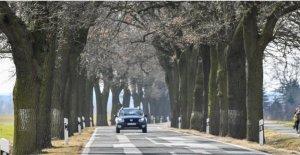 Voiture-Transports: Pourquoi sur les Routes en autant d'Arbres?