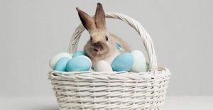 La grande fête de Pâques ABC: De A comme Résurrection jusqu'à Z comme Zuckowski