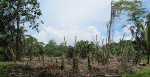 Rapport de l'ONU: Jusqu'à 1 Million d'espèces animales et Végétales menacées
