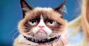 À la Mort de Grincheux Cat: Pourquoi aimons-nous vraiment Internet de Chats?